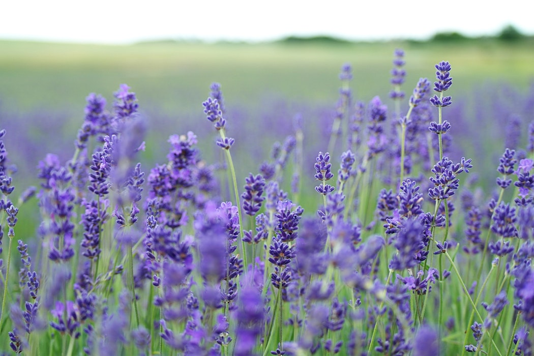 3 Essential Oils For Beautiful Hair