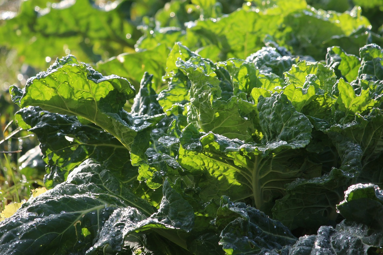 collard greens nutrition